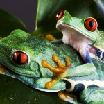 Pragniesz doświadczyć przełomu? Stań się pożeraczem żab