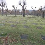 """Cmentarz Braci Morawskich w Herrnhut zwany """"Rolą Pańską""""."""