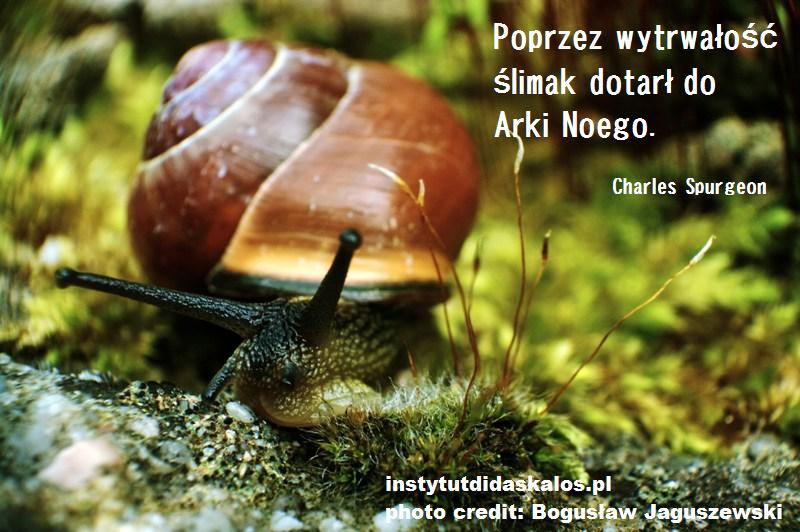 slimak_photo_credit_Boguslaw_Jaguszewski_