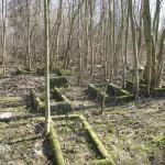 stary cmentarz ewangelicki