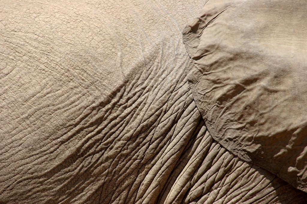 elephant-1188444