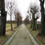 Aleja prowadząca na cmentarz Bożą Rola.