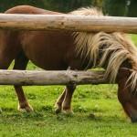 O koniu, który się zabił